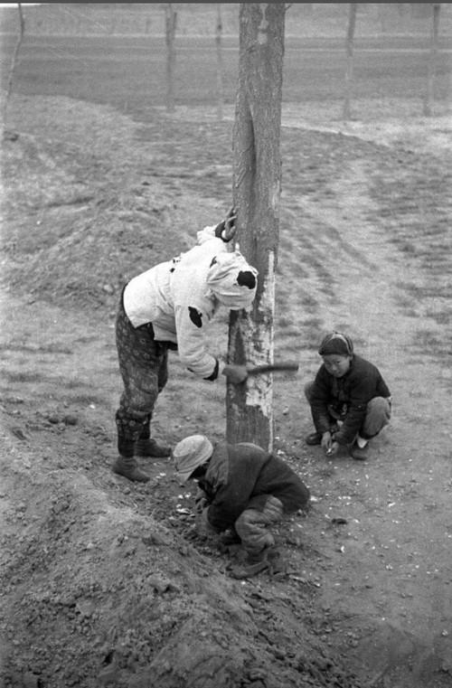 98张照片回味1942(10)_液晶电视新闻-中关村在线