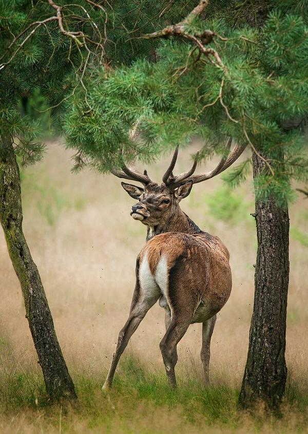 动物的灵感世界 国外摄影师后期创意作品