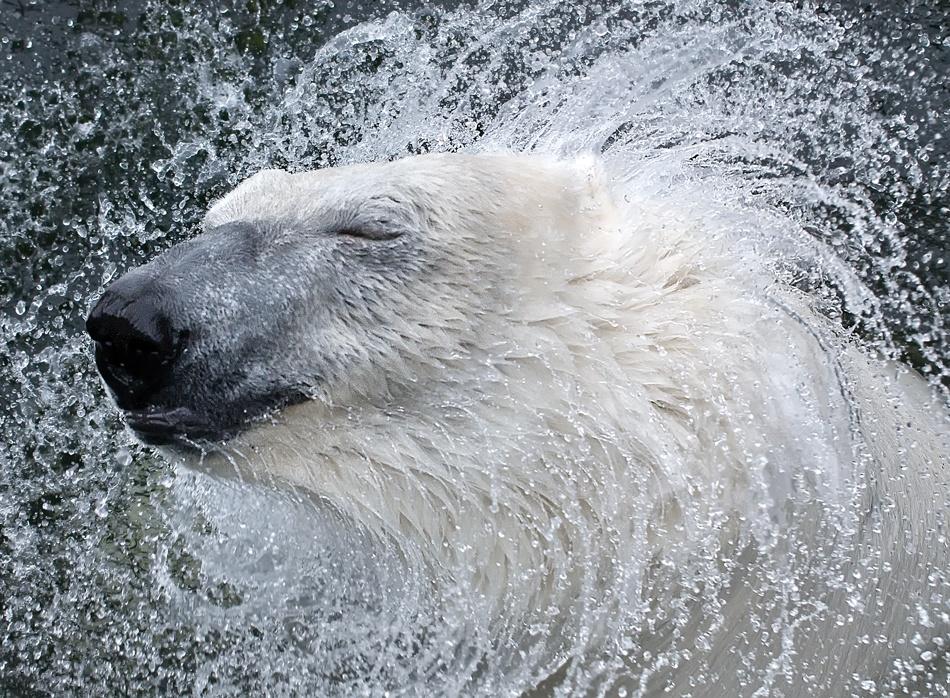 奔跑的犀牛,洗澡的猴子