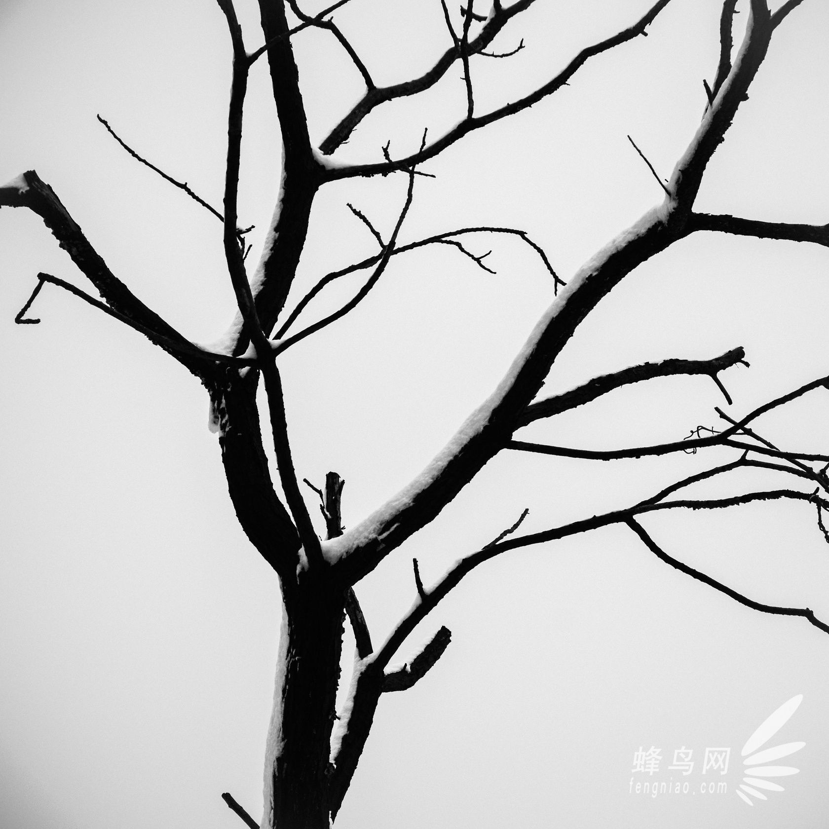 图形创意树木影子