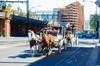 大C游世界 澳大利亚墨尔本街头的马车