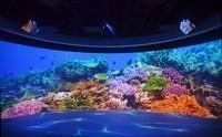 沉浸其中 投影打造光影科技海底世界