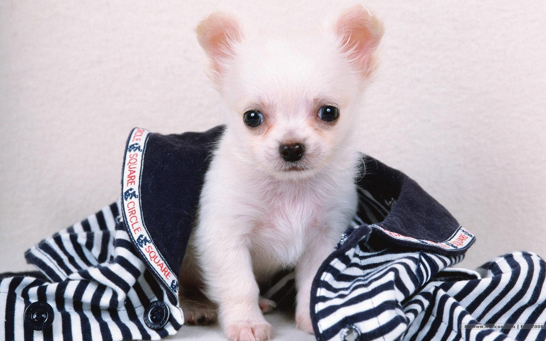 1440×900可爱小狗壁纸图片欣赏