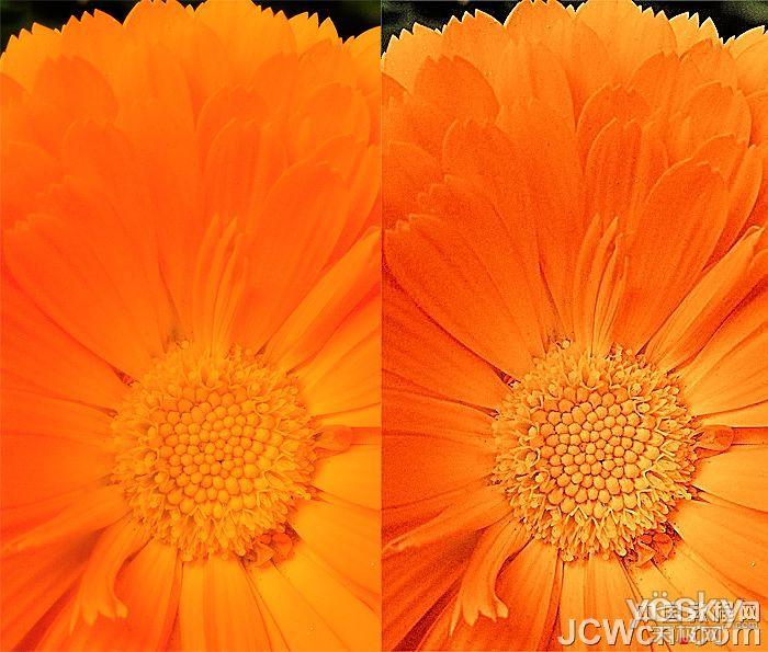 【高清图】 ps找回欠曝花朵颜色层次和锐度图1