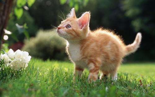 可爱小猫壁纸
