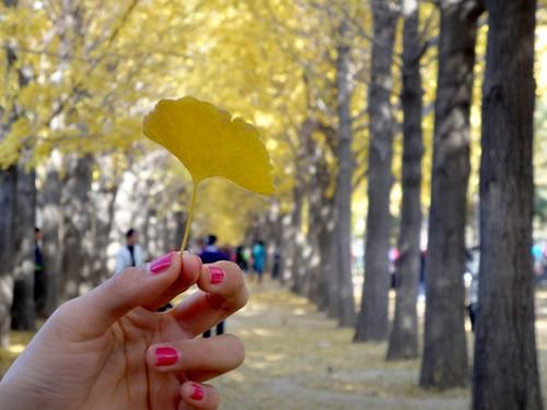 一片银杏叶带来的爱情 大胆说爱 索尼wx5c找寻银杏童话爱情