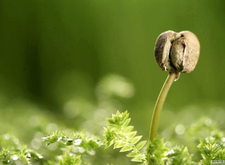 只要心地里还埋藏着希望的种子(原创) - 没由 - 宁静以致远