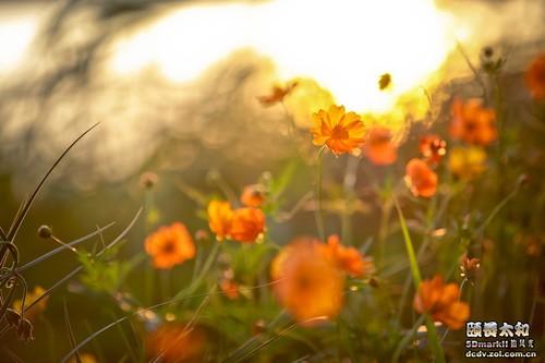 秋季风光行摄攻略 之大光圈长焦镜头实战