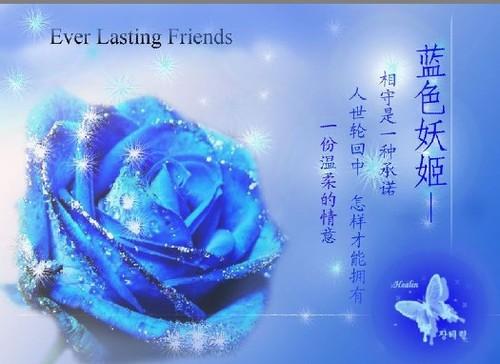 """不谢的""""蓝色妖姬"""",相守一生的承诺"""