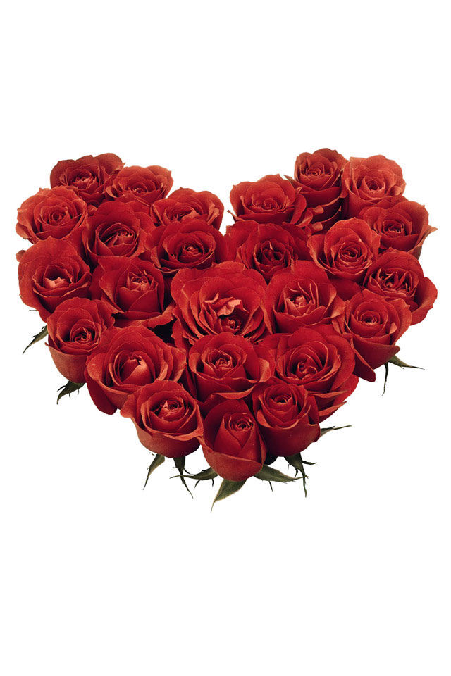 情人节玫瑰传情手机壁纸下载640x960
