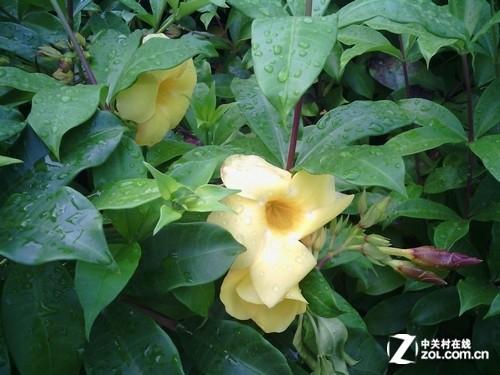 闪光动态花朵素材